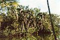 Jardin de Pamplemousses (3005315304).jpg