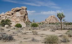 Joshua Tree National Park 2013.jpg