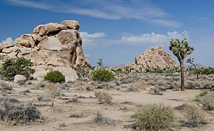Joshua Tree National Park - Joshua Tree National Park; a typical view