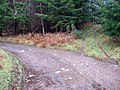 Junction in Blackpark Wood - geograph.org.uk - 1106001.jpg