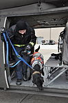 K9s train with Rhode Island National Guard 150320-A-FR455-160.jpg