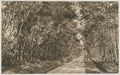 KITLV - 12623 - Kleingrothe, C.J. - Medan - The road to Binjai near Tanjung Djatti in Deli - 1903.tif