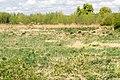 Kalletal - 2015-05-02 - LIP-013 Aberg-Herrengraben (39).jpg