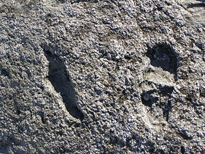 Kartenos akmuo