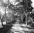 Kaziranga forest.jpg