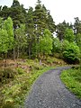 Kirroughtree Forest - geograph.org.uk - 431772.jpg