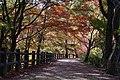 Kobe municipal forest botanical garden18s3872.jpg