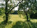 Koettmannsdorf Ploeschenberg Karutschnig-Wiese 19062011 222.jpg