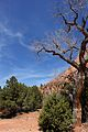 Kolob Canyons, Walk to the Kolob Arch (Zion National Park) (3440201468).jpg