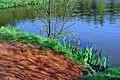 Kolorowy staw - panoramio.jpg
