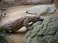 Komodo Dragon (2007).jpg