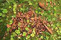 Konglespisingsrester fra ekorn - squirrel meal.jpg