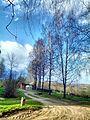 Korotsko, Novgorodskaya oblast', Russia, 175423 - panoramio (19).jpg