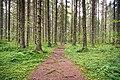 Koskikaran kierros trail.jpg
