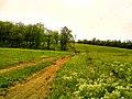 Krasnodons'kyi district, Luhans'ka oblast, Ukraine - panoramio (1).jpg