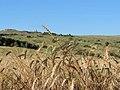 L'osservatorio al cospetto dei campi agricoli.jpg