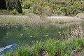 Lago d'Ampola (MGK12414).jpg