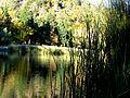 Lake Reeds (2972767928).jpg