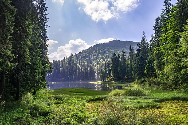 Lake Synevyr is the largest lake in the Carpathian Mountains of Ukraine. Lake Synevyr is located in the northwestern part of the National Nature Park Synevyr near the foothills of the 1,495-meter-tall Mount Ozerna.