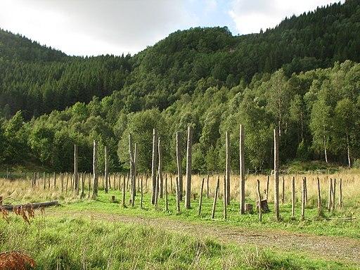 Landa - wooden posts