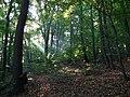Lasek Wolski 4 - panoramio.jpg