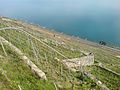 Lavaux Vineyards.jpg
