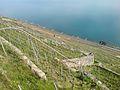 Lavaux Vineyards.jpg