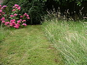 The area on the right was not mowed since the previous Autumn