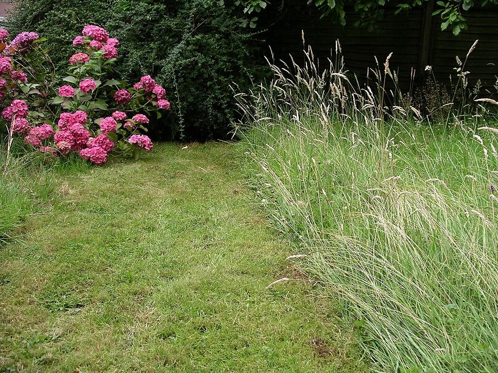 Lawn 16l07