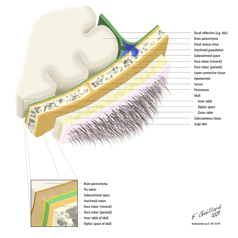 Layers of the scalp and meninges