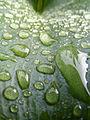 LeafDroplets.jpg