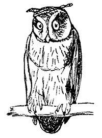 Lear 2 - Owl.jpg