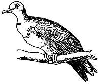 Lear 3 - Dove.jpg