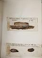 Lichenes Helvetici pars altera 014.jpg