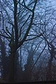 Light through trees in Volkspark Friedrichshain (32607923591).jpg