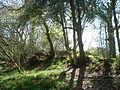 Linear eathwork in Crates Wood, nr Castle Rings 02.JPG