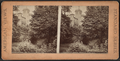 Litchfield castle, Prospect Park, N.Y, from Robert N. Dennis collection of stereoscopic views 3.png