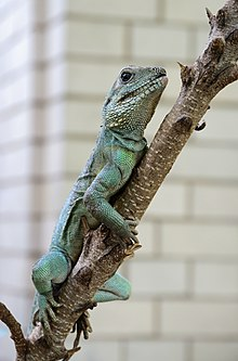 Lizard Amsterdam July 2019-3.jpg