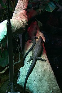 Lizards under heat lamp.jpg