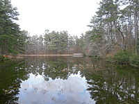 Small lake surrounded by old growth forest in winter
