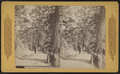 Lovers Bower, Fort Lee on the Hudson, N.Y, by Continent Stereoscopic Company.png