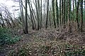 Lower Arles Wood - geograph.org.uk - 1163272.jpg