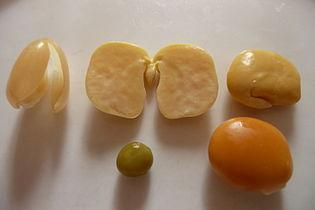 Lupin jaune, peau, lupin sans sa peau, petit pois, lupin intact (avec peau).JPG