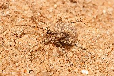 Spider - Wikipedia