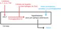 Mécanismes de la fièvre.png