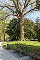 Münster, Park Sentmaring, Naturdenkmal -- 2015 -- 5660.jpg