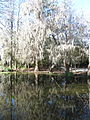 Magnolia Plantation and Gardens - Charleston, South Carolina (8556491040).jpg