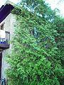 Maison Pascal-Persillier dit Lachapelle 06.jpg