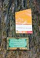 Mammutbaum Schlosspark Tafeln Beschreibung.jpg