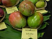 Mango Jakarta Asit ftg.jpg